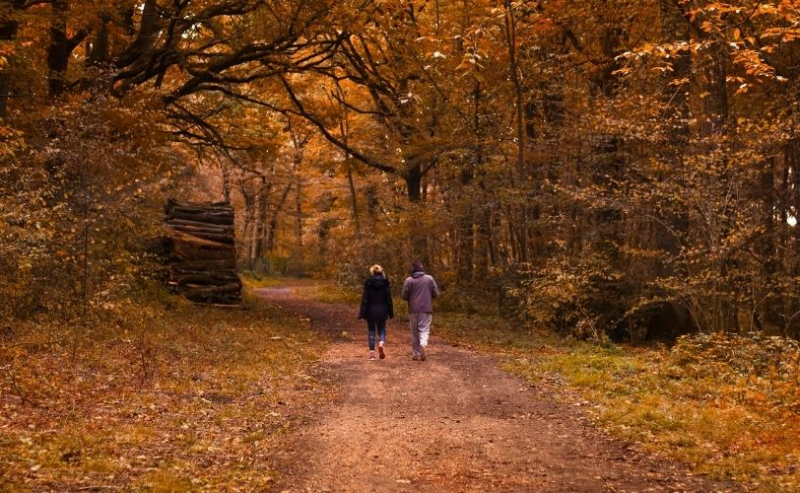 Two people walking in forest